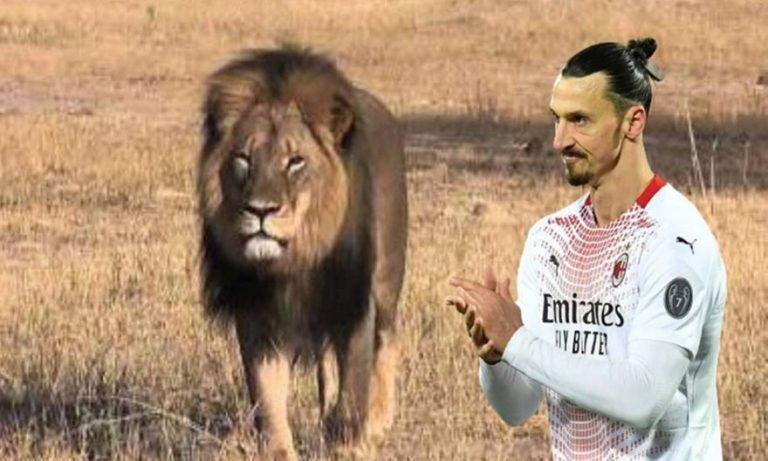 Σάλος με Ιμπραΐμοβιτς: «Σκότωσε ένα λιοντάρι και πήρε το κεφάλι του για τρόπαιο»!